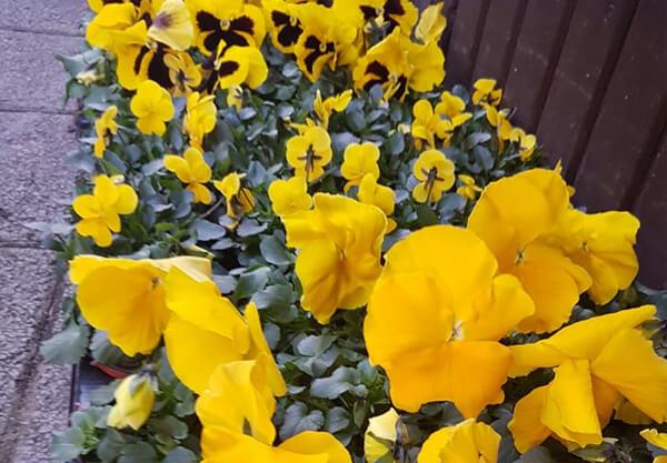 Es wird Frühling 3