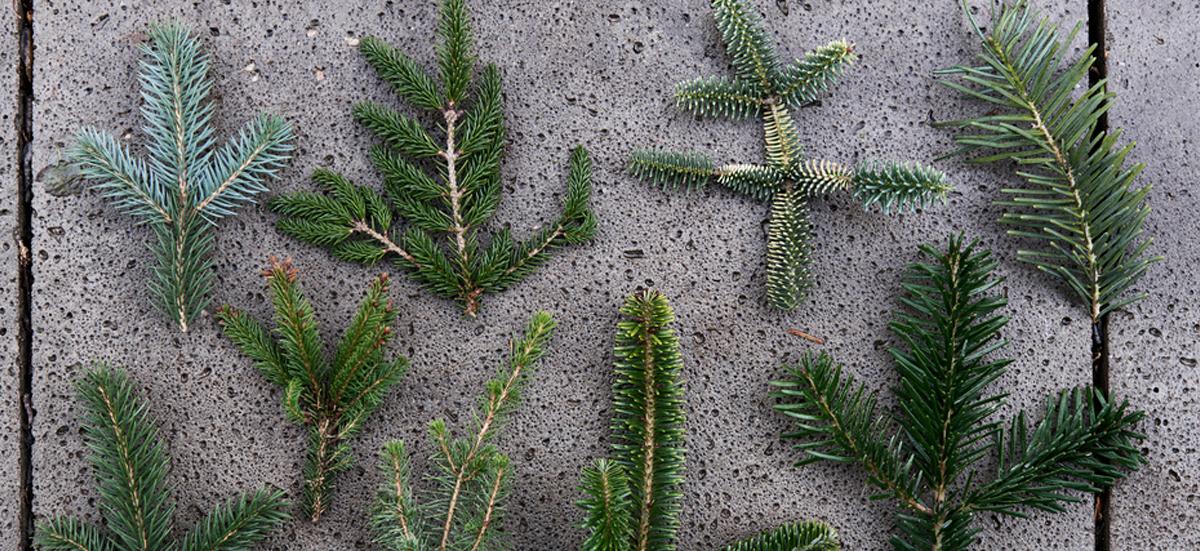 Gartenpflanzen Symbolbild 2