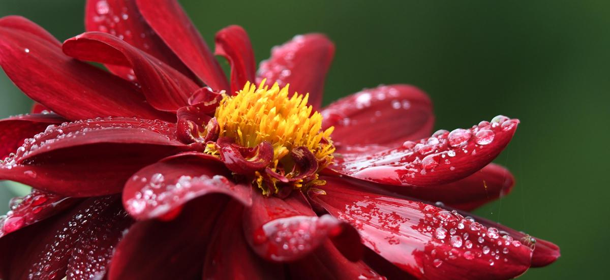 Lieblingsblume Symbolbild 1