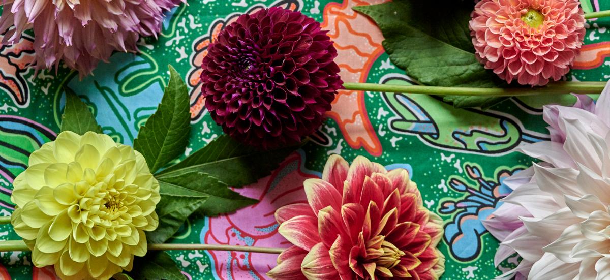Lieblingsblume Symbolbild 2
